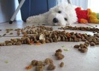 Hundefutter - Traum und Wirklichkeit