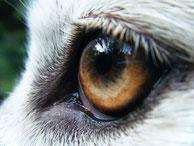 Ein gut Amt vernaturet oft das Schaf in einen Wolf