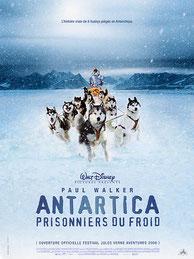 film antartica chiens de traineaux