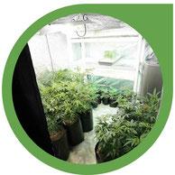 Der Growraum - Lampen, Growboxen, Belüftung und mehr