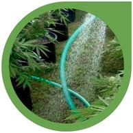 Bewässerung, Nährstoffe & pH Wert