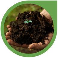 Cannabis Samen, Erde und Dünger