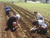 毎回、畑仕事をしながら有機農業の基本を学びます