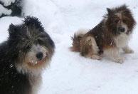 Familienhund Anfänger Elo Kinderfreundlich Welpe