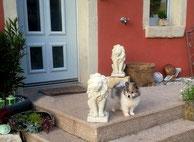 Familienhund Klein-Elo