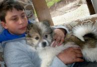 Familienhund kinderlieb
