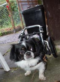 Foto: private Tierhilfe Marl