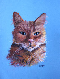 a cat drawing in pastel on blue paper