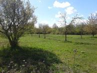 Wildwiesen beim Ökohof