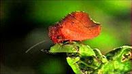Камуфляж насекомых