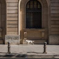 Bildbeispiel Hund zum Praxistipp: SONY RX100 I,II,III,IV,V mit quadratischem Bildformat 1:1 in Barcelona. Foto: bonnescape