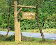 ブナの群生地が多い県有森