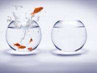 Stratégie de marché, stratégie d'offres, océan rouge, océan bleu, marketing, digital, omnicanal, big-data, blockchain, ecommerce