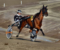 Reve d'Amour in Solvalla