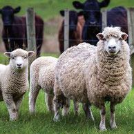 家畜の遺伝的多様性の保護。MENJ。
