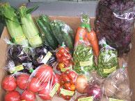 無農薬の夏野菜