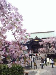 春の南蔵院