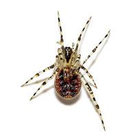 Platnickina tincta
