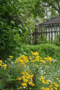 Naturnaher Kleingarten (Foto: NABU/Eric Neuling)