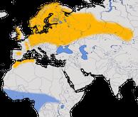 Karte zur Verbreitung des Trauerschnäppers (Ficedula hypoleuca)