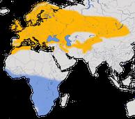Karte zur Verbreitung des Grauschnäppers (Muscicapa striata)