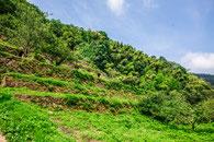 世界遺産石見銀山(島根県)