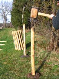 Pfähle einrammen mit dem Holzhammer.....