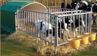 Agro-Widmer Stalleinrichtungen und Silos - Foto Aktion 5er Kälberiglu