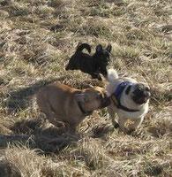 jeder Hund hat das Recht auf ein gesundes Leben