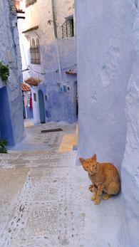 ロッコ青い街シャウエンの野良猫/La belle chaouen(ラベルシャウエン)みかのブログ