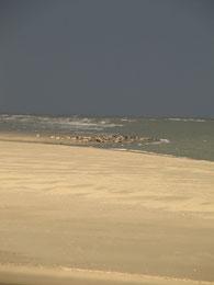 Les phoques et les couleurs de la Baie au cours d'une Sortie Art et Nature en Baie de Somme