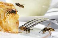 Wasp fly home Wespen auf Kuchen Spayflasche Wespenspray