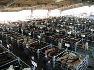 Marché national de bestiaux à Laissac (tous les mardis matins)