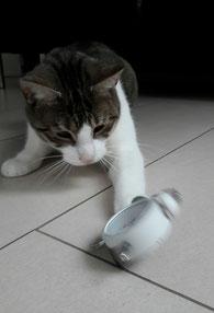So ein Wecker ist doch für die Katz! 😉