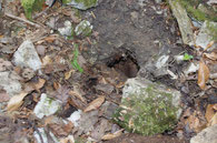 In dem Loch in der Erde kann man ein Wellblech erkennen