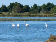 Flamingos bei Porto Botte