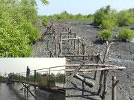 Brückenzugang durch die Mangroven von Meyingbé