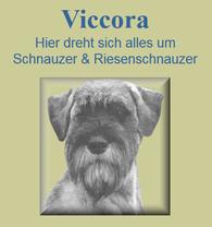 viccora, Zuchtschau, Schnauzer von Viccora