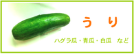 うり ウリ 瓜 レシピ