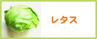 レタス レシピ