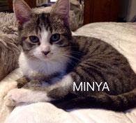 Minya : Al-Minya est la capitale de la Moyenne-Égypte à environ 245 km au sud du Caire.