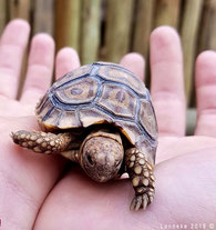 Turtle in rehab in South Africa