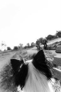 Signalhunde, Therapiebegleithunde, Assistenzhundezentrum