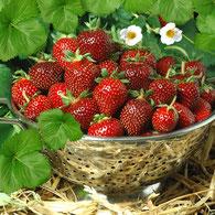 Фото из просторов интернета, но очень точно передает форму и цвет ягоды.