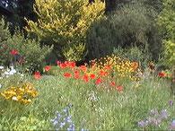 Naturgarten.jpg