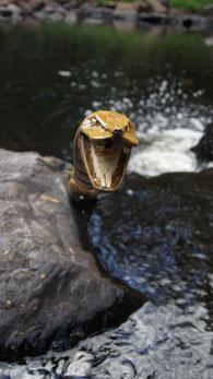 Schlangenkopf aus Holz ragt aus dem Wasser