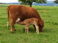 Feines Fleisch ab Hof, Natura Beef