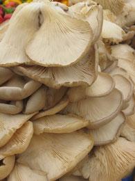 Bild: Mykotherapie, Pilzheilkunde, Heilpilze, Vitalpilze, Medizinalpilze, Pilze