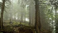 Eine mystsiche Stimmung im Bergwald