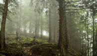 bergwald, bäume, wolken, nebel, fog, clouds, forest, mystic, schweiz, switzerland, alpstein, säntis, wandern, wanderweg, wetter, natur, nature, photo , wood, travel , reisen, hikking, mountains, alps, umwelt, environment, mystsicher wald, wanderweg, path